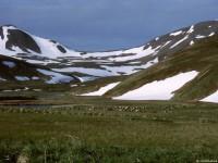 Порой снежники сохраняются на островах до конца лета