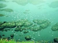 Численность морских птиц, гнездящихся на Командорах, достигает 1 млн.